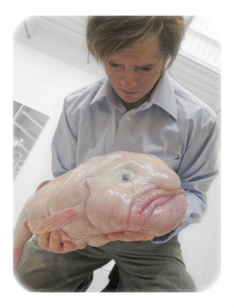 Le Blobfish Poisson Rare Et Tres Laid