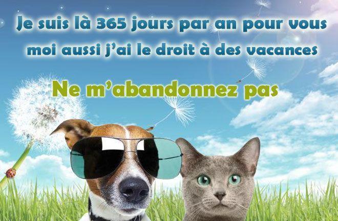 """Résultat de recherche d'images pour """"partir en vacances avec son chien et son chat"""""""