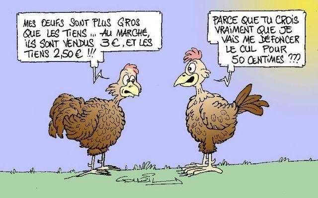 Humoristique page 21 - Photos poules rigolotes ...