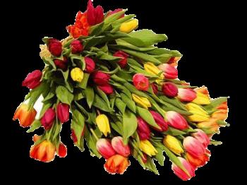 همسة لكل من ينتمي الى منتدانا... fleurs-5789.png
