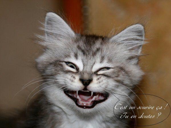 """Résultat de recherche d'images pour """"de rire mort humour"""""""
