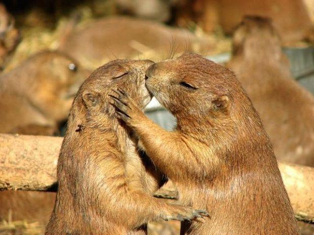 """Résultat de recherche d'images pour """"des animaux qui s'aiment"""""""